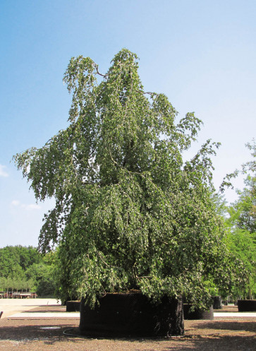 gaerten des jahres 2019 callwey gartenbuch loesung pflanze bruns