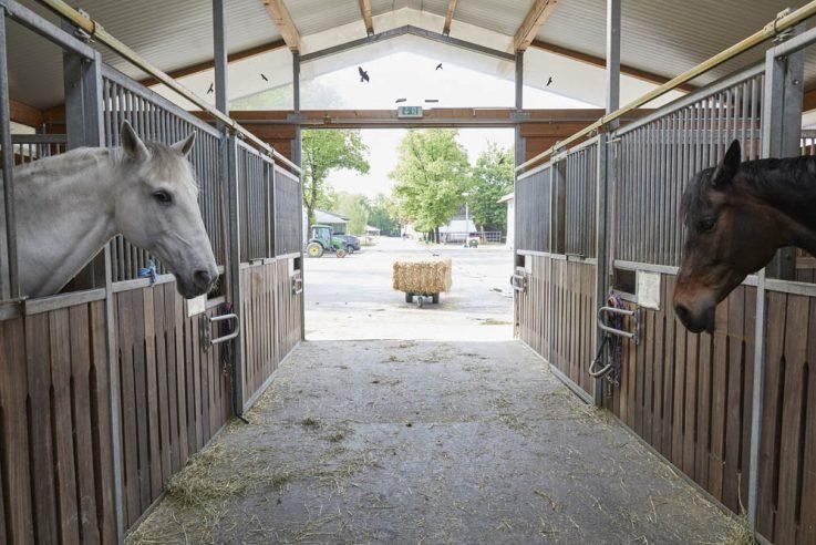 Callwey-Pferdeglück