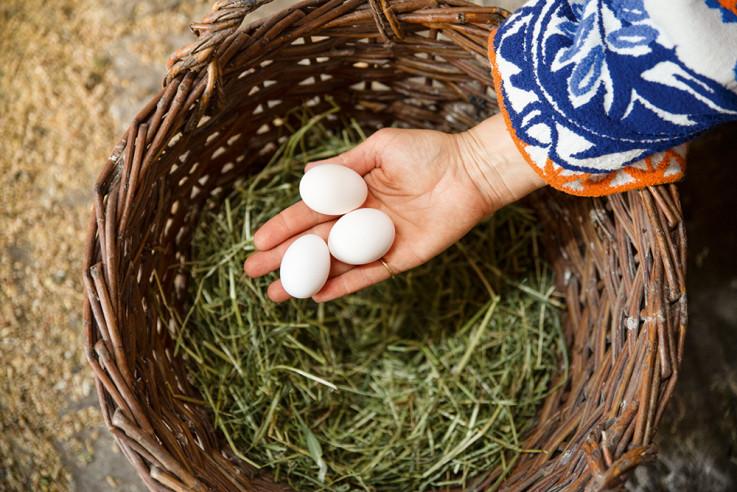 vom glück mit hühnern zu leben eve büchner eier nest