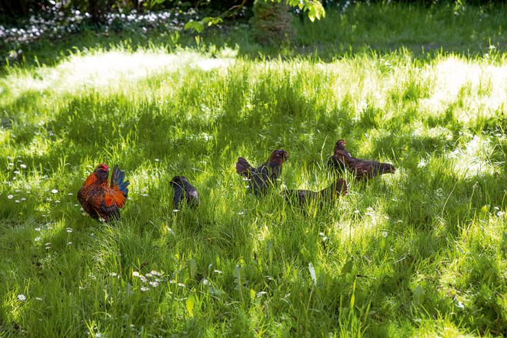 vom glück mit hühnern zu leben eve büchner entspannung wiese