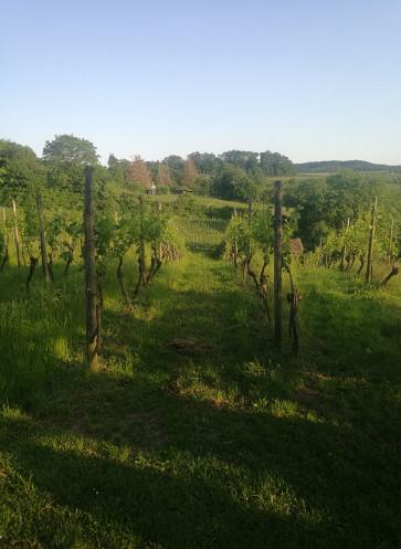 Garten-Gipfel 2019 Weinsberg
