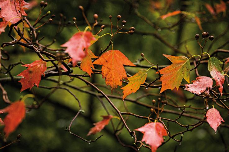 callwey-november-rain-bunte-blätter