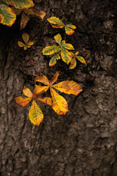 callwey-november-rain-laub