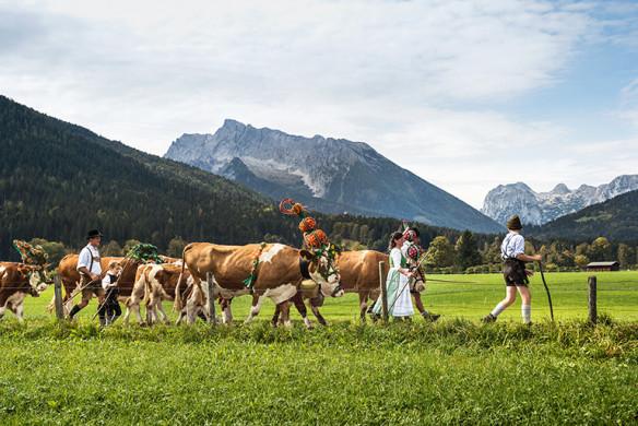 Zu Gast in Bayern_Albabtrieb