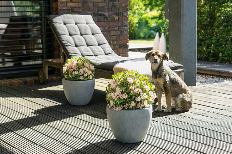 gärten-des-jahres-2020-lösungen-bloombux-inkarho