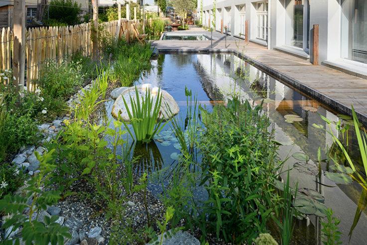 gärten-des-jahres-2020-lösungen-salamander-naturgarten