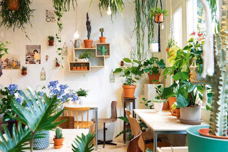 callwey-urban-jungle-wohnen-in-gruen