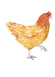 callwey-[midnightchicken]-[huhn]
