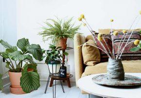 Pflanzenpracht im Wohnzimmer