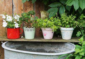 callwey-[Gartenglück]-[Garten]